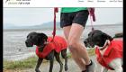 Bellingham Dog Runner