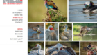 Mike Caroff Wildlife Photography